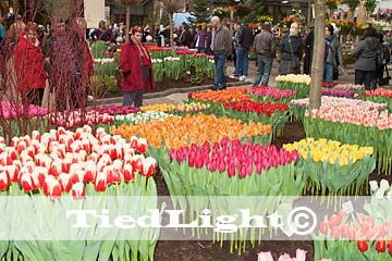 holland flowers festival